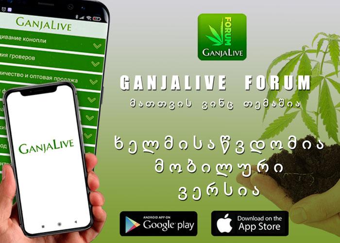 """ახალი ნაბიჯი ციფრულ სამყაროში - უფასო პროგრამა """"GanjaLive"""""""